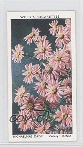 Michaelmas Daisy (Trading Card) 1939 Wills Garden Flowers by Richard Sudell - Tobacco [Base] - Eire (Irish) ()