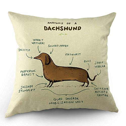 HL HLPPC Anatomy of A Dachshund Throw Pillow Case Cotton Linen Cushion Cover 18 x 18 Inches Standard Square Decorative Pillow Cover for Sofa and Bed One Side Print