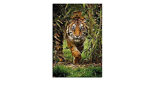 Poster Bamboo Tiger 61x91.5cm
