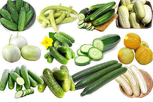 - 100+ Cucumber Mix Seeds ORGANICALLY Grown 12 Varieties Non-GMO Delicious and Healthy, Grown in USA. Rare, Super Profilic and Delicious!