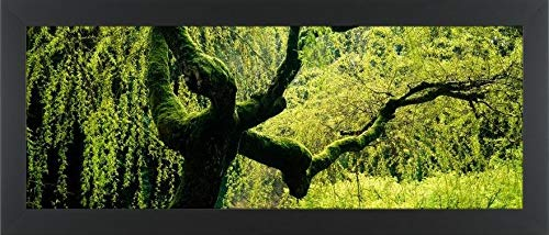 (Easy Art Prints Panoramic Images's 'Moss Growing on The Trunk of a Weeping Willow Tree, Japanese Garden, Washington Park, Portland, Oregon, USA' Framed Canvas Art - 24