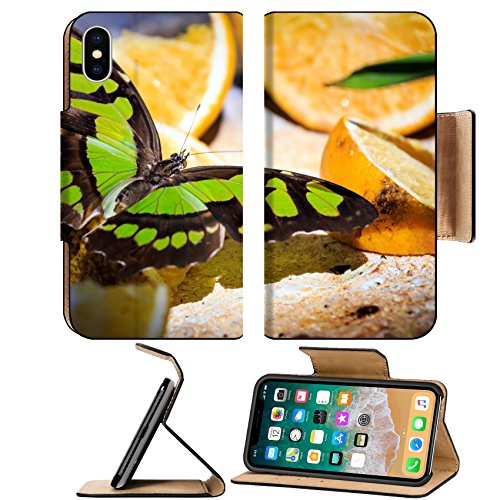 MSD Premium Apple iPhone X Flip Pu Leather Wallet Case IMAGE ID: 28274502 Closeup of Malachite butterfly feeding on slices of orange fruits (Belt Malachite)