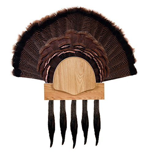 Walnut Hollow Country DIY 5 Beard Turkey Display Kit, Solid Oak for Gun & Bow ()