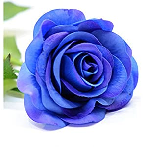 iMeshbean Colorful 20 Head Real Latex Touch Rose Flowers for Wedding Home Design & Bouquet Decoration USA 57