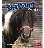 Shetland Ponies, Erin Monahan, 1429622350