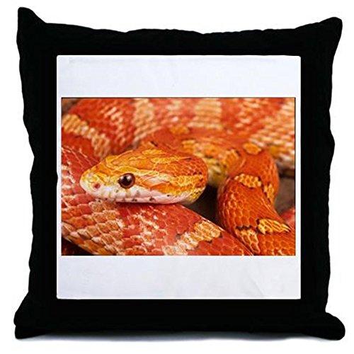 corn snake for sale - 2