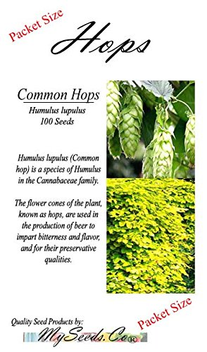 Hops Seeds - You Choose Size - Humulus lupulus Seeds - Brew Your OWN Beer Today - Comes Back Every Year - Plants Develops Rhizomes - Zones 3-8 - Non-GMO ()