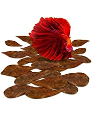 SunGrow Mini Catappa Indian Almond Leaves For Betta, 2 Inches, Promotes Breeding, Lowers Your Tank'S Ph, Decreases Stress In Fish, Shrimp, And Frogs, Improves Habitat, Unique Decoration, 50 Pack