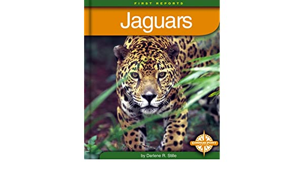 jaguars first reports animals darlene r stille 9780756500559