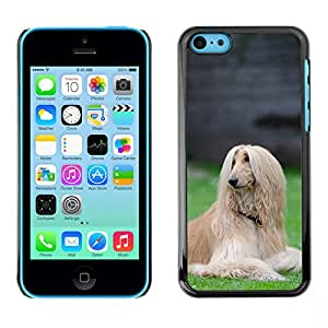 Hot Style Cell Phone PC Hard Case Cover // M00112674 Afghan Greyhound Afghan Hound Spout // Apple iPhone 5C
