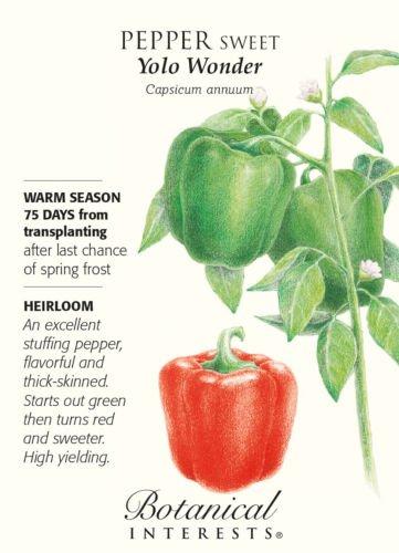 Vegetable Seeds - 500 mg Seeds of Yolo Wonder Sweet Pepper Seeds