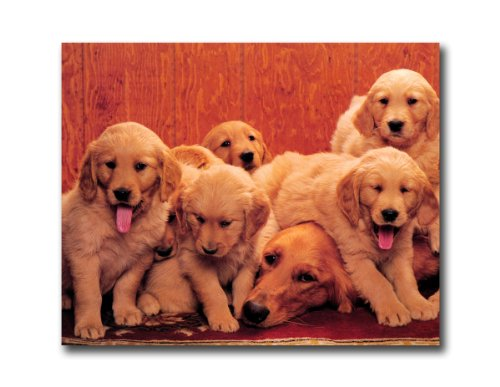 (Golden Retriever Mom With Puppy Dogs Wall Picture 8x10 Art Print )