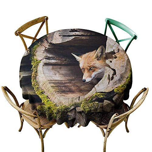 Zmlove Animal Antifouling Tablecloth Forest Nature Wild Fox with Hazel Eyes in a Wooden Carved Tree wth Moss Art Print Washable Tablecloth Multicolor (Round - 47