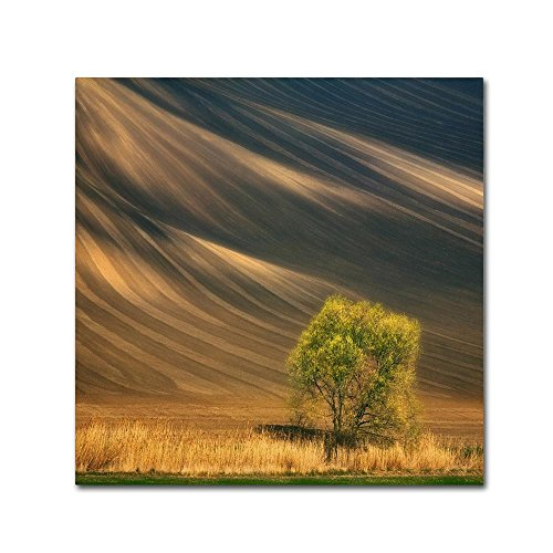 Tree by Krzysztof Browko, willow tree Canvas Wall Art