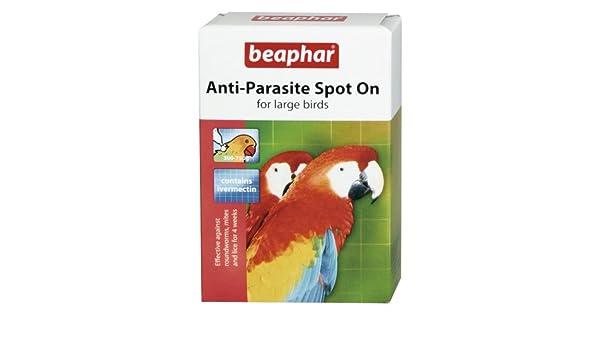 Tratamiento antiparásitos para loros, de la marca Beaphar: Amazon.es: Productos para mascotas
