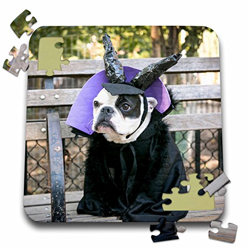 Danita Delimont - Halloween - New York City. Pet Halloween contest at Thompkins Square Park. - 10x10 Inch Puzzle (Dog Halloween Costume Contest)