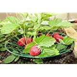 Strawberry Supports - Easy to Use Strawberry Plant Support with 3 Sturdy Legs - Protection of Strawberry Plants from Mold, Rot and Dirt 6 per Pack