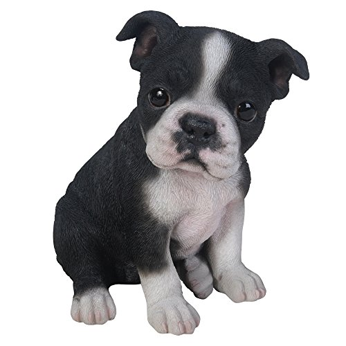 Pacific Giftware Adorable Seated Boston Terrier Puppy Collectible Figurine Amazing Dog Likeness Hand Painted Resin 6.5 inch Figurine Great for Dog Lovers Tabletop - Terrier Figurine Dog Boston
