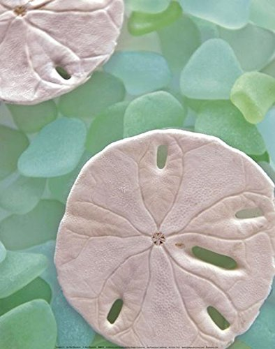 Seaglass-5-Sand-Dollar-holes-by-Alan-Blaustein-14x11-Photograph-Art-Print-Poster-Wall-Decor-Coastal-Beach-Seaside-Ocean