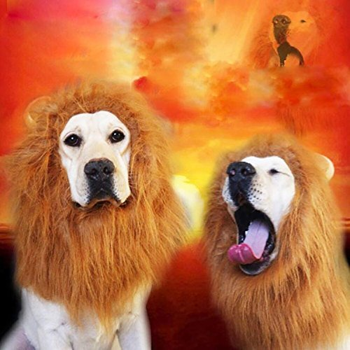 Ikevan Dog Wig Costume Washable Lion Head Sets (from 60cm to (Friendly Lion Adult Costumes Kit)