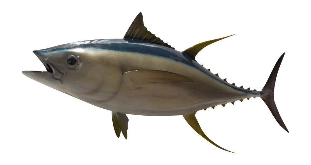 Mount This Fish Company 55'' Yellowfin Tuna Fish Wall Mount Fish Replica Trophy, For Restaurant Owners, Vacation Homes, Outdoors and Indoors, Fish Replicas by