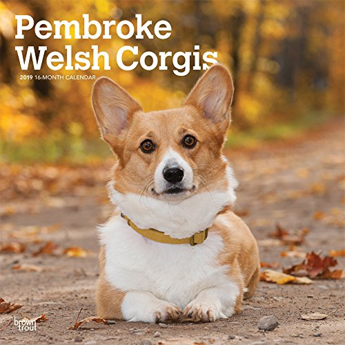 Pembroke Welsh Corgis 2019 12 x 12 Inch Monthly Square Wall Calendar, Animals Dog Breeds (Multilingual Edition) ()