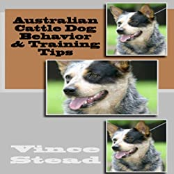 Australian Cattle Dog Behavior & Training Tips