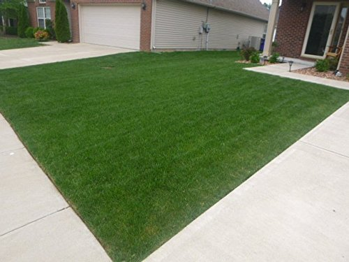 Velvet Blue Grass Seed Blend (5000 sq ft) by Nature's Seed