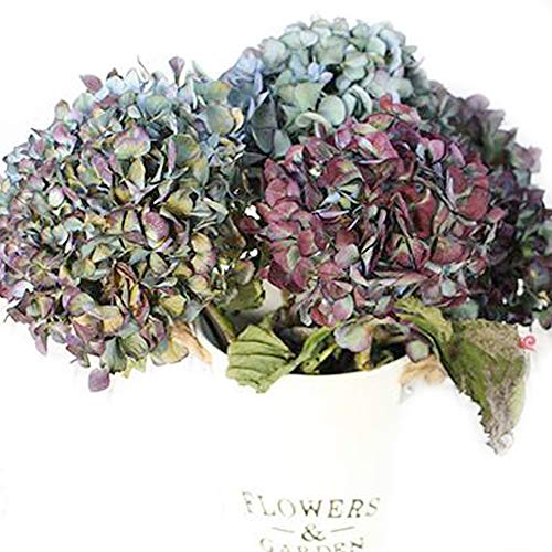 Natural Air-Dried Hydrangea Flowers, for DIY Wreath  Ornament   Wedding   Living Room Decoration,2 Stems (Bluish Purple)