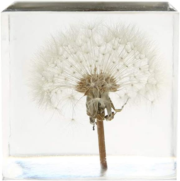 VOSAREA 3D Dandelion Crystal Glass Cube Transparent Desktop Statue Ornament for Birthday Wedding Valentine Gift Home Decor