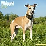 Whippet Calendar - Dog Breed Calendars - 2017 - 2018 wall Calendars - 16 Month by Avonside