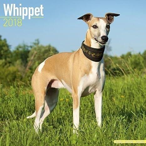 Whippet Calendar Dog Breed Calendars 2017 2018 Wall Calendars
