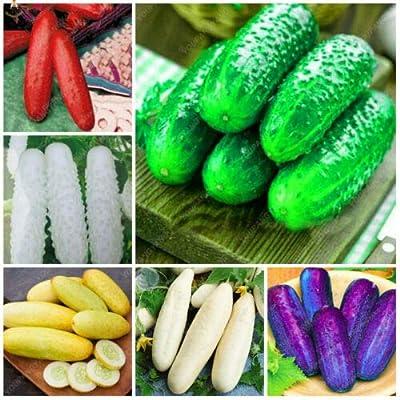 Cucumber Rare Delicious Seeds Plants Vegetable Fruit Patio Lawn Garden Gift 100 PCS : Garden & Outdoor