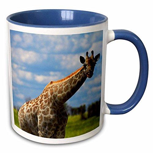 (3dRose Danita Delimont - David Wall - Giraffe - Giraffe Giraffa camelopardalis, Nxai Pan NP, Botswana, Africa - 15oz Two-Tone Blue Mug (mug_187903_11))