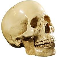 Yundxi Figura Esqueleto anatómico de la enseñanza del