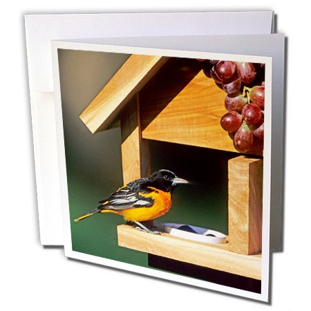 3dRose Danita Delimont - Oriole - Baltimore Oriole male on jelly and grape feeder, Illinois - 12 Greeting Cards with envelopes ()