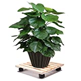Tosnail 12'' Square Wooden Plant Caddy Plant Stand with 4 Wheels (2 with Locking Caster)