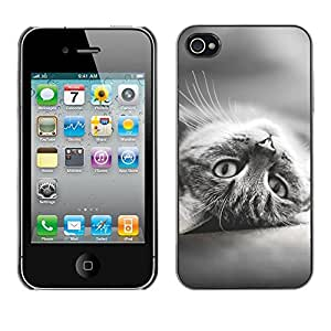 Hot Style Cell Phone PC Hard Case Cover // M00100610 kitten gray animals // Apple iPhone 4 4S