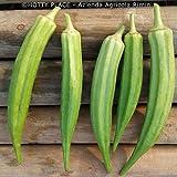 Okra CLEMSON SPINELESS 20 Semi Ocra Senza Filo ortaggio verdura Gombo Ocra Bamya