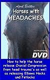 Equine Cranio Sacral DVD