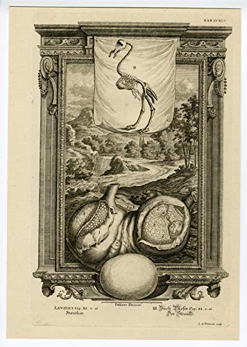 ThePrintsCollector Antique Print-Ostrich-Skeleton-Egg-Plate 245-Friderich-Scheuchzer-1731
