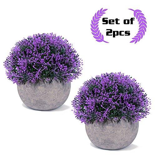 Vangold Lifelike Artificial Plants Plastic Grass Plants with Pots for Home/Office Decor (Purple - 2 pcs) by Vangold