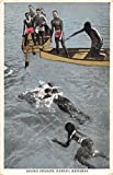Nassau Bahamas Diving Pennies Antique Postcard J16128