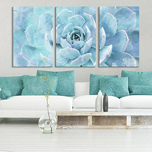 3 Panel Closeup of a Blue Succulent Plant Gallery x 3 Panels