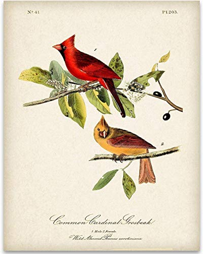 Game Bird Print - Two Cardinals Illustration - 11x14 Unframed Art Print - Great Home Decor and a Great Gift Under $15 for Bird Watchers