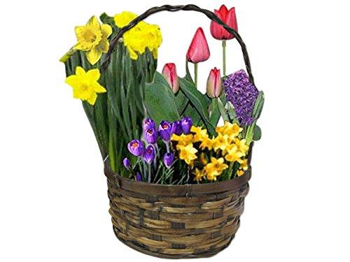 Spring Garden Bulb Gift Basket