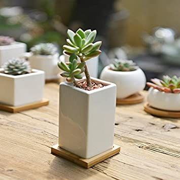 Amazoncom SUNE Modern White Ceramic Succulent Planter Pots