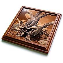 3dRose Danita Delimont - California - USA, California, White Mountains. Bristlecone pine tree. - 8x8 Trivet with 6x6 ceramic tile (trv_278528_1)