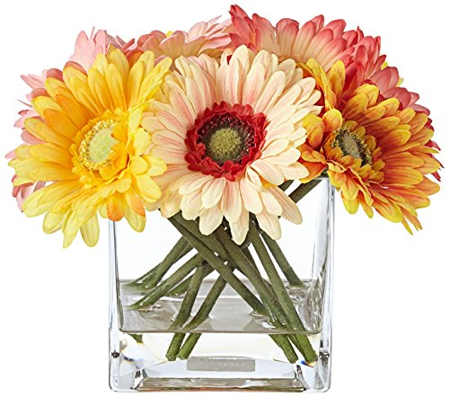 Silk-Gerber-10-12-Wide-Daisies-in-Clear-Square-Glass-Vase