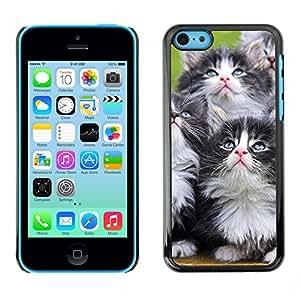 Vortex Accessory Carcasa Protectora Para APPLE iPHONE 5C - Kittens Munchkin Cat Pet Feline -